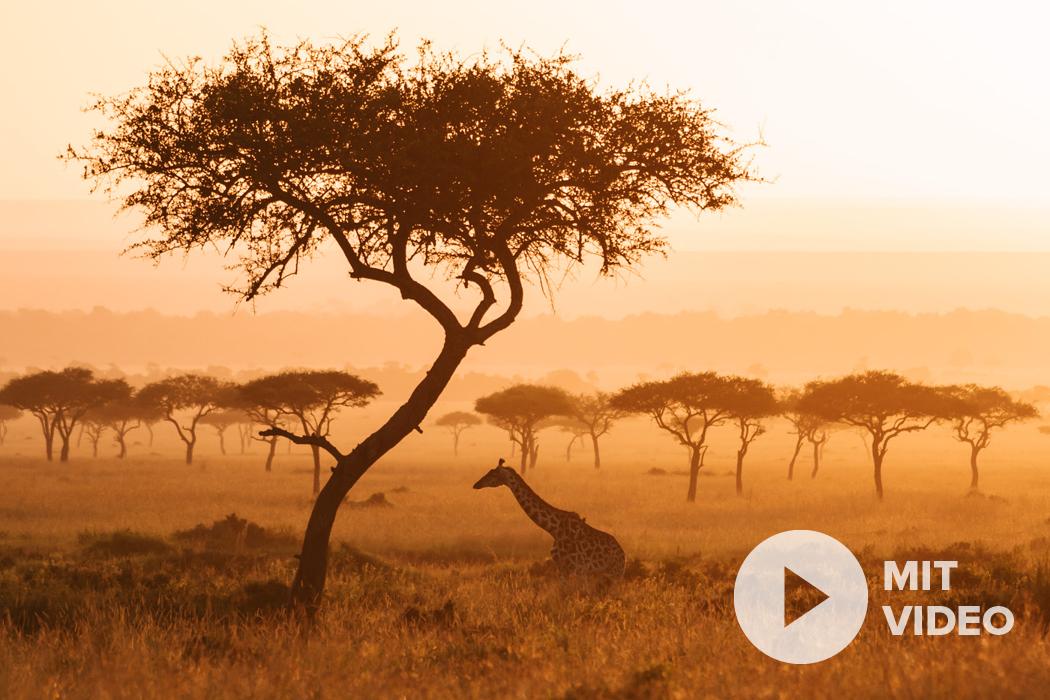 Nikon Z Safari Fotografie